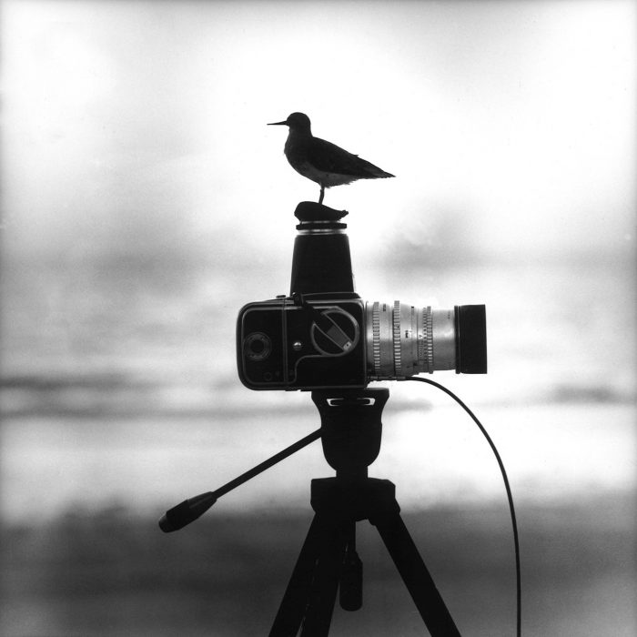 The bird behind the camera